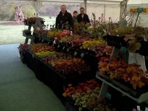 Plantagogo Heucheras at RHS Wisley Spring Plant Fair