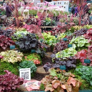 Plantagogo Heucheras at Rhs Shade of Autumn Show London