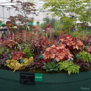 BBC Gardeners World Live show Plantagogo display 2014