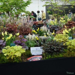 Plantagogo Heuchera display at Harroagte Spring Flower Show