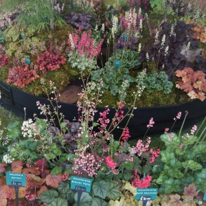 Birds eye view of Plantagogo display at Rhs Malvern Spring Festival 2014