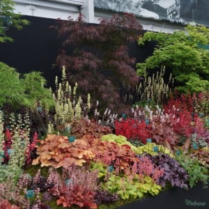 Plantagogo Gold medal winning display Rhs Chelsea Flower Show 2014