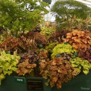 Plantagogo at Rhs Hampton Court Palace Flower Show