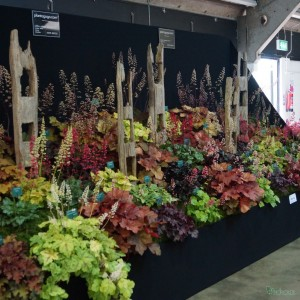 Plantagogo 2014 display at the Harrgate Autumn Flower Show.