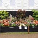 Display of Heucheras at Chelsea