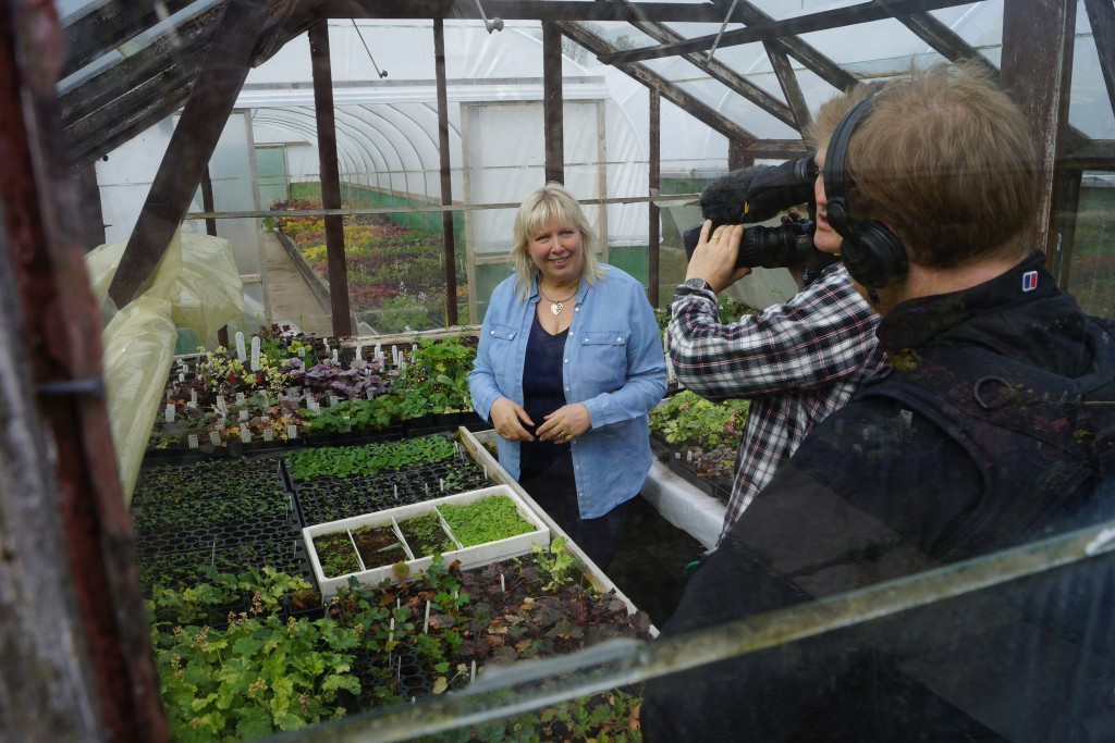 Vicky and cameras in the small propagation house at Plantagogo Heucheras