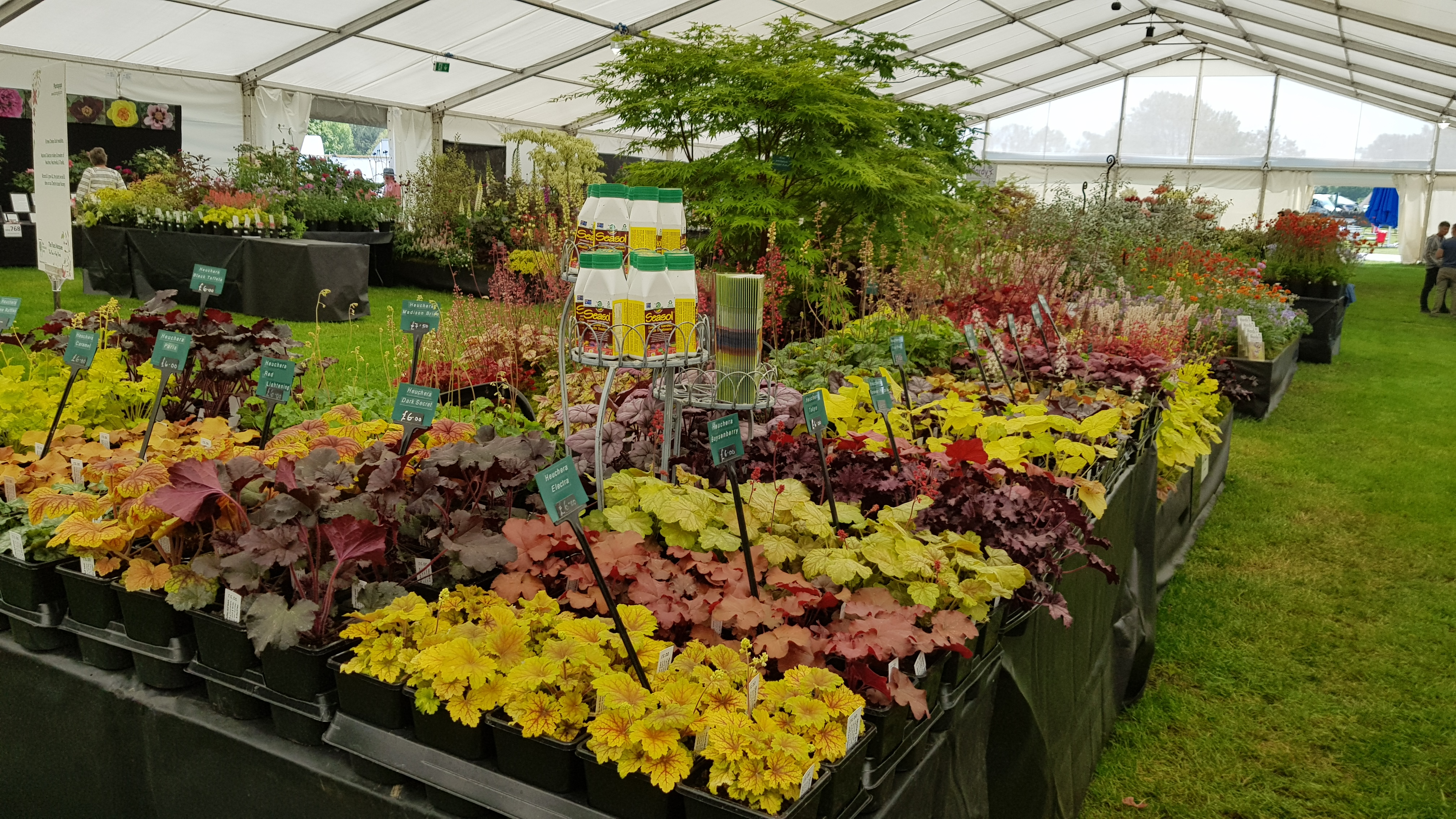 Seductive Malvern Spring Show  Photos And Getting Ready For Rhs Chelsea  With Gorgeous Thanks So Much To All Who Supported Us And Bought Plants This Weekend We  Hope They Make Great Additions To Your Gardens With Breathtaking Public Garden Also Nj Gardens In Addition Kew Gardens Lights And Lotus Garden Apartments As Well As Used Garden Shed For Sale Additionally Daisy Garden From Plantagogocom With   Gorgeous Malvern Spring Show  Photos And Getting Ready For Rhs Chelsea  With Breathtaking Thanks So Much To All Who Supported Us And Bought Plants This Weekend We  Hope They Make Great Additions To Your Gardens And Seductive Public Garden Also Nj Gardens In Addition Kew Gardens Lights From Plantagogocom