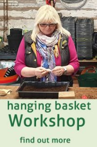 click here to find out more about hanging basket workshops