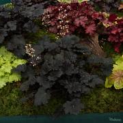 Binoche in flower