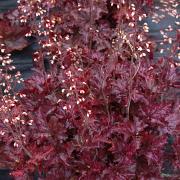 Blackberry Crisp in Autumn