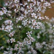Flowers in loose sprays very pretty