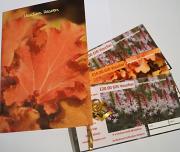 orange Heuchera card