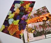multi coloured heuchera card