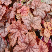 Foliage grown in a shady place