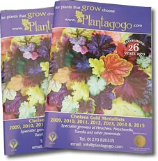 Catalogue Plantagogo