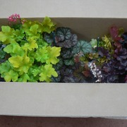 What plants look like in their boxes