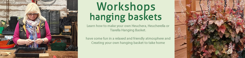 Hanging Basket Workshops