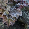 Bronze Beauty in the winter