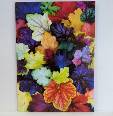 Multi-coloured Heuchera Card